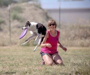 Photo of Dog Agility