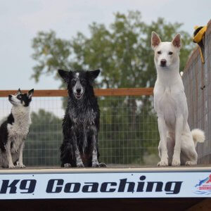 Photo of Dogs Dog Sports